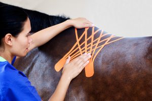 kinesiology tape on horse back