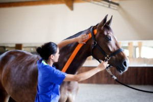 kinesiology taping for equine neck