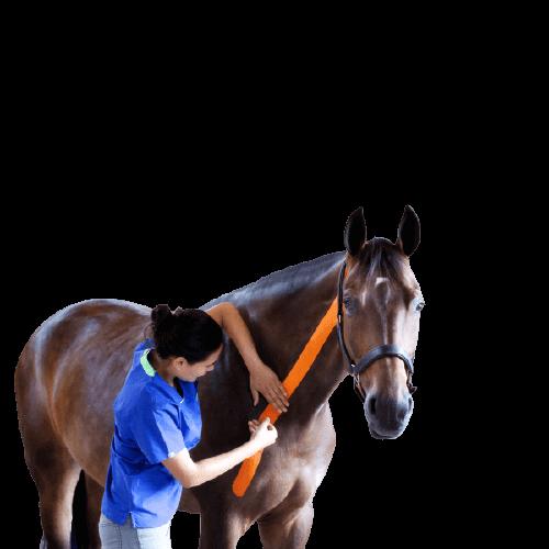 VetkinTape-veterinary-kinesiology-tape (2)