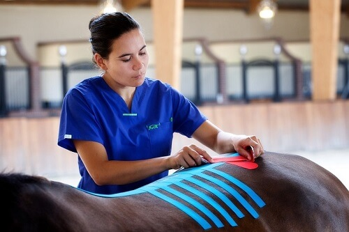 kinesiology-taping-course-equine
